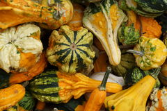 Pile of ripe squashes. Closeup of pile of different colored ripe squashes Stock Image
