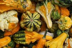 Pile of ripe squashes Stock Image