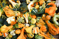 Pile of ripe squashes Stock Photo