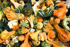 Pile of ripe squashes stock photo