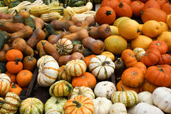 Pile of ripe squashes Royalty Free Stock Image