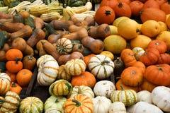 Pile of ripe squashes. Closeup shot of Pile of ripe squashes Royalty Free Stock Image