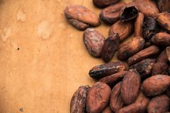 Roasted Cocoa Beans on a Wooden Table royalty free stock photos