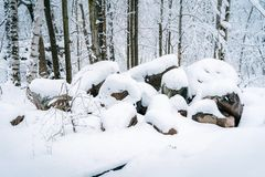 Snow covered rocks in a forest stock image