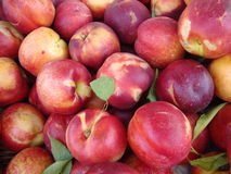 Pile of Rose Diamond Nectarines Stock Photography