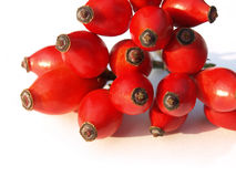 Pile of rose hips Stock Images