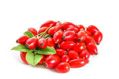 Pile of rose hips Royalty Free Stock Images