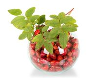 Pile of rose hips in round glass bowl and branch with leaves isolated on white Royalty Free Stock Images