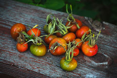 A pile of rose hips Stock Photography