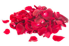 Pile of rose petals. Pile of crimson red rose petals isolated on white background royalty free stock images