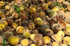 Pile of rotten and ripe santol or cottenfruit in house garden stock photo