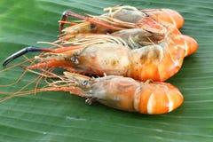 Pile row of shrimp grilled. On banana leaf Royalty Free Stock Photos