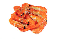 Pile of royal shrimp Royalty Free Stock Image