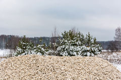 A pile of rubble amid pine trees covered with snow. Royalty Free Stock Photography