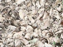 Pile sèche de feuille Photo stock
