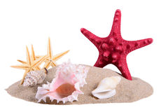 Pile of sand with seashells and starfish. Summer pile of sand with seashells and starfish isolated on white royalty free stock images
