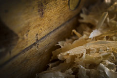 Pile of sawdust and piece of wood Royalty Free Stock Image