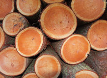 A Pile of sawed Pine Trees Stock Photos