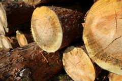 Pile of sawed pine wood Royalty Free Stock Photos