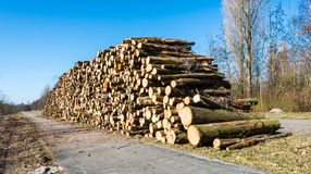 Pile of sawed trees ready for transport royalty free stock photography