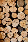 Pile of sawn logs Royalty Free Stock Photography
