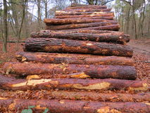 A pile of sawn tree trunks in beautiful autumn colors Royalty Free Stock Photography
