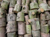 A pile of sawn trunks. A pile of sawn grey green trunks in the wood Royalty Free Stock Photos
