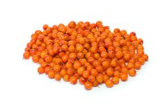 Pile of sea buckthorn berries. Isolated on the white background Stock Photos