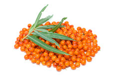 Pile of sea buckthorn berries and some leaves Royalty Free Stock Images