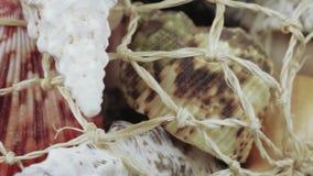 Set of seashells bulk. A pile of sea shells in bulk in a grid stock video footage