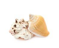 Pile of sea shells  Royalty Free Stock Photos