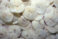 Pile of Sea Shells, Ft. Myers, Florida Stock Photo