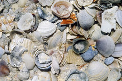 Pile of Sea Shells In The Sand, California Stock Photos