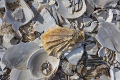 Pile of sea shells in Wellfleet, MA Stock Photo