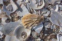 Pile of sea shells in Wellfleet, MA Stock Photo