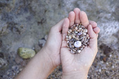 Pile of seashells in palms Royalty Free Stock Photo