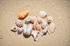 Pile of seashells. On the sand Stock Photo