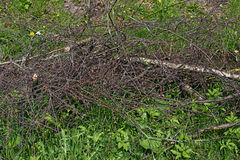 A pile of severed branches on the grass Stock Photo