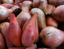 Pile of Shallots Stock Photography