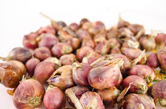Pile of shallots  isolated on white background. Shallot is ingredient of alot of thai food and catchup Stock Photography