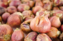 Pile of shallots  isolated on white background. Shallot is ingredient of alot of thai food and catchup Stock Image