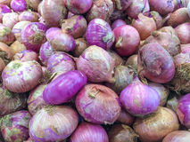 Pile shallots in the market. Pile of big organic shallots in a crate on sale in the market for asian cooking Stock Image