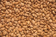 Shelled almonds texture. Pile of shelled almonds, top view stock image