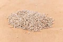 Pile of shelled sunflower seeds, isolated Stock Photo