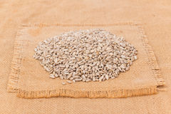 Pile of shelled sunflower seeds, isolated Royalty Free Stock Photography