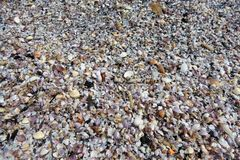 A pile of shells lying om the beach Royalty Free Stock Photography