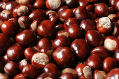 Pile of shiny chestnuts Royalty Free Stock Image