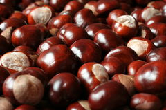 Pile of shiny chestnuts Stock Image