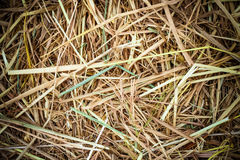 Pile of Straw or Hay Stock Image