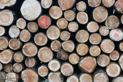Pile of small cut trunks of spruce tree wood stock images